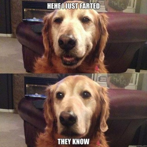 dogs,embarrassing,funny,fart