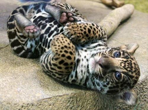 Babies leopard cute spots - 8100736000