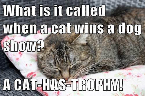 puns Cats win - 8100831232