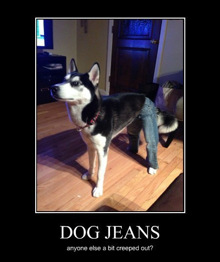 animals dogs eww funny jeans wtf - 8100956416