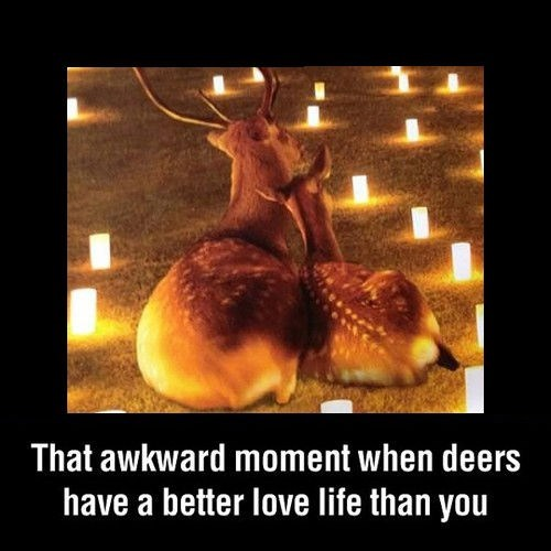 awesome deer sweet funny - 8100992512