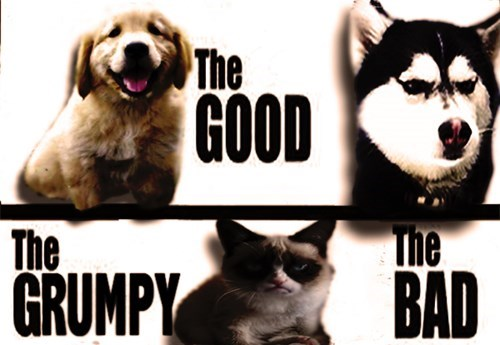 Siberian husky - The GOOD The GRUMPY The BAD