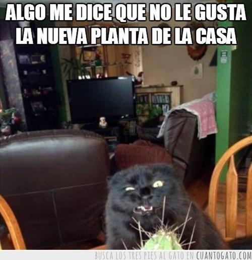 Memes animales gatos - 8101193472