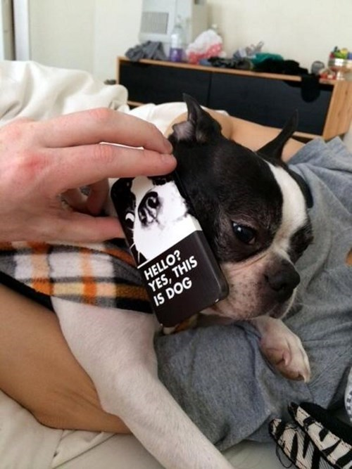 companies dogs funny this is dog - 8101232384