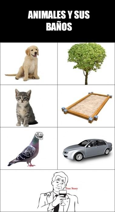 Memes animales gatos perros - 8101246464