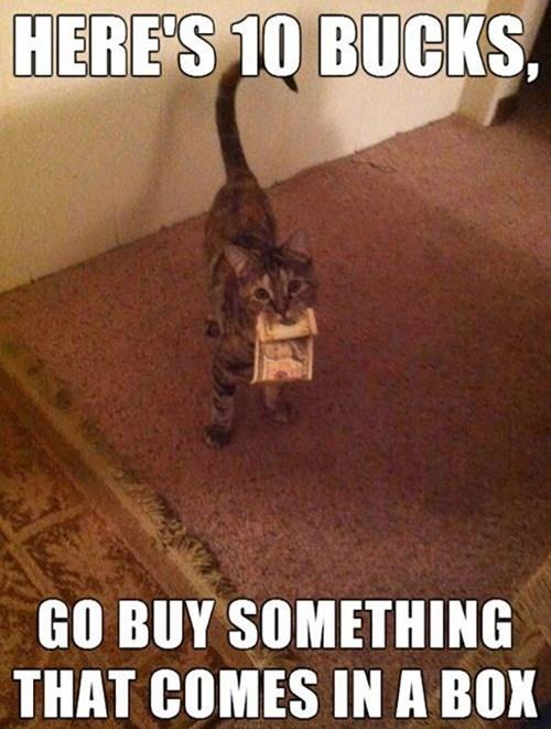 box,Cats,funny