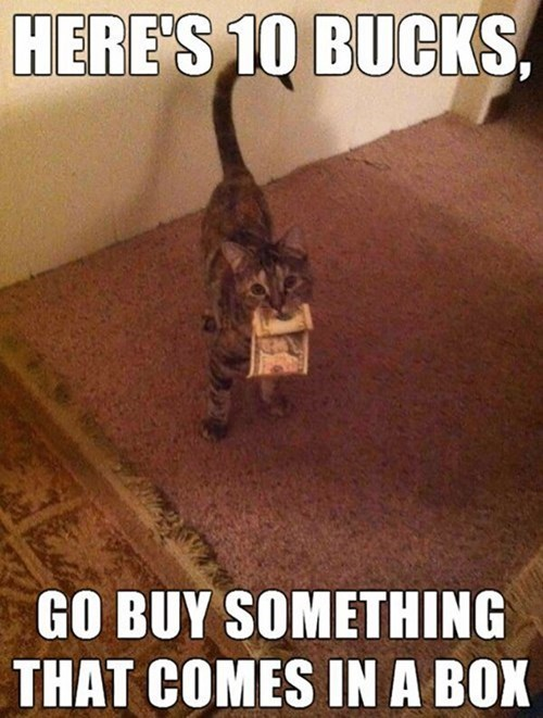 box Cats funny - 8101248768