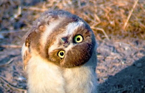 cute upside down owls - 8101249536