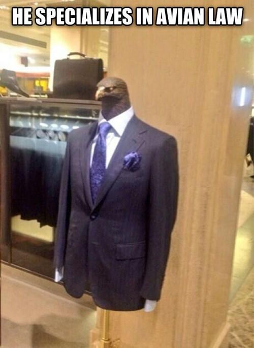 puns,weird,suits