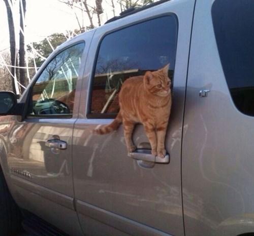 noms Cats funny - 8101294592