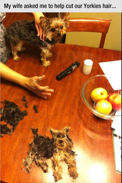 dogs,whoops,haircut