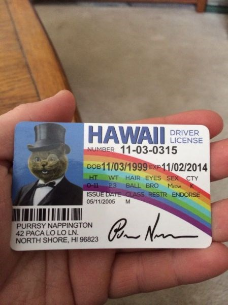 fake id,fake,happy cat