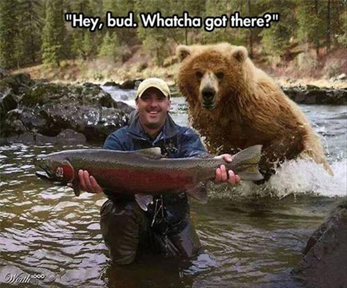 scary fishing bears salmon - 8101506816