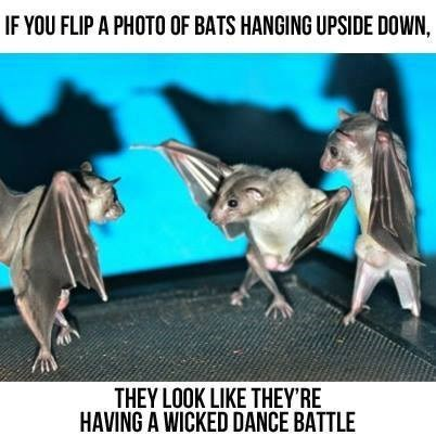 bats,dance battle