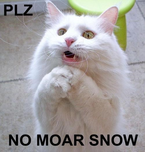 spring,snow,winter,Cats