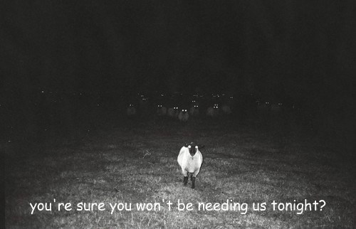 creepy,nightmare,sheep