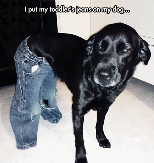 dogs poorly dressed kids pants parenting - 8102341376