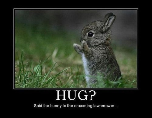 cute hugs bunny funny animals - 8102359040