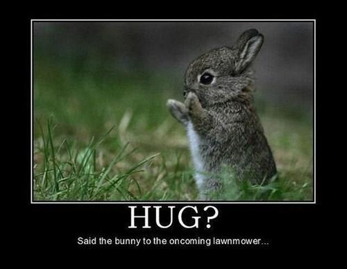 cute hugs bunny funny animals - 8102359040