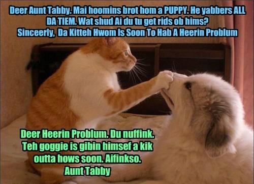 Deer Aunt Tabby. Mai hoomins brot hom a PUPPY. He yabbers ALL DA TIEM. Wat shud Ai du tu get rids ob hims? Sinceerly, Da Kitteh Hwom Is Soon To Hab A Heerin Problum Deer Heerin Problum. Du nuffink. Teh goggie is gibin himsef a kik outta hows soon. Aifinkso. Aunt Tabby