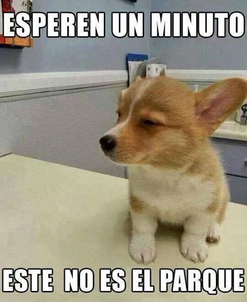perros Memes animales fotos - 8102386176