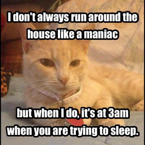 annoying Cats funny - 8102508288