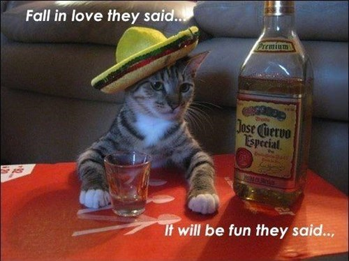 tequila love Cats funny - 8102608896