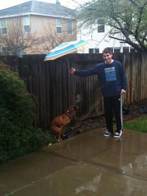 dogs,poop,funny,rain
