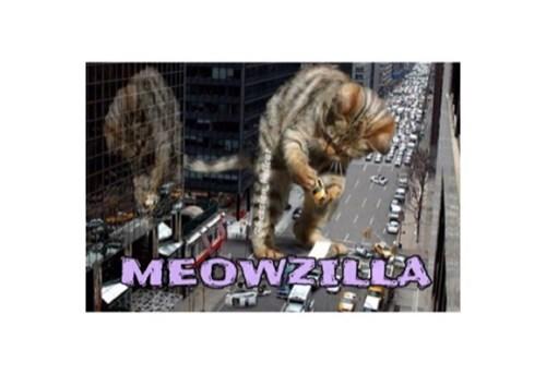 Cats,funny,godzilla