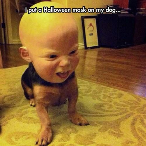 dogs halloween masks - 8102787840