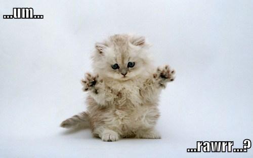 scary,kitten,cute
