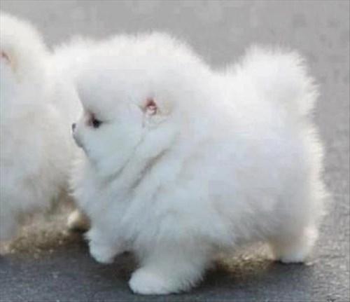 puppies,Fluffy,cute