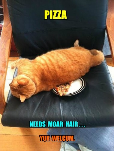 annoying cat hair funny pizza