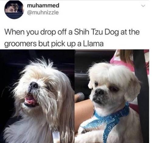 funny memes animal memes animals - 8103429