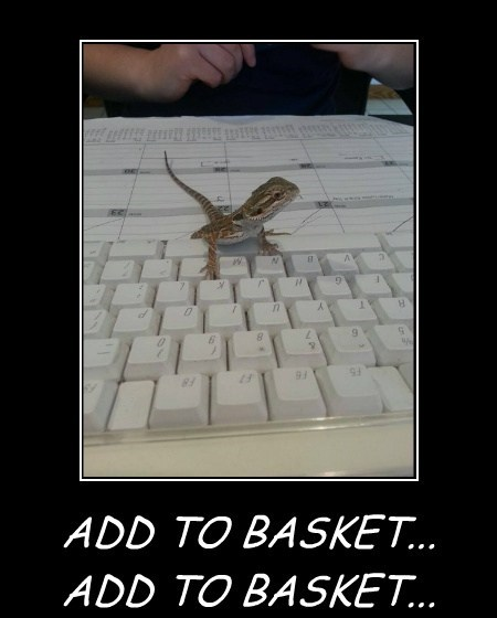 lizards,computers,online shopping,funny