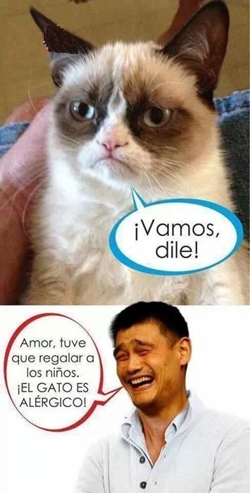 gatos Memes animales - 8103823104