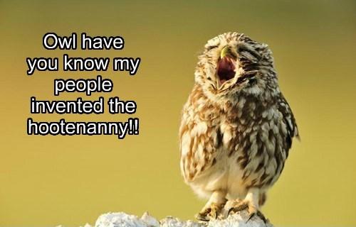 puns,cute,owls