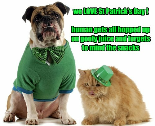 Cats,cute,dogs,St Patrick's Day,noms