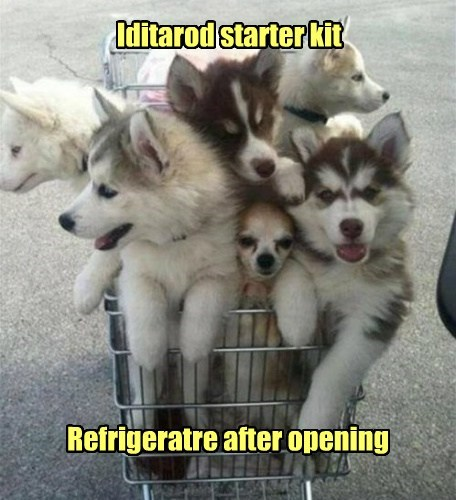 Iditarod starter kit Refrigeratre after opening