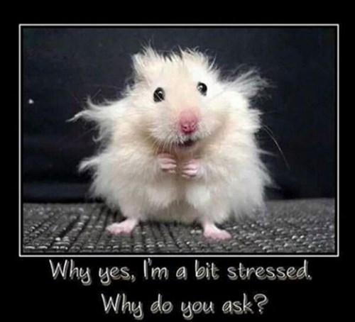 stressed hamsters funny - 8104315904
