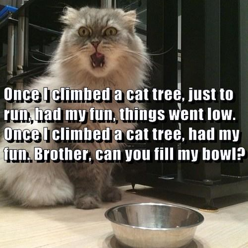 Once I climbed a cat tree, just to run, had my fun, things went low. Once I climbed a cat tree, had my fun. Brother, can you fill my bowl?
