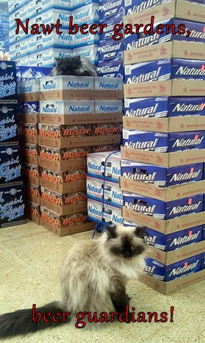 beer guard Cats funny - 8104855296
