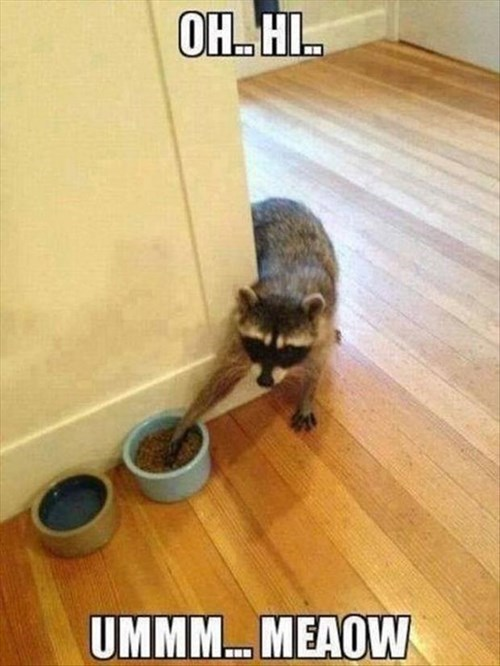 theif,raccoons,Cats,imposter