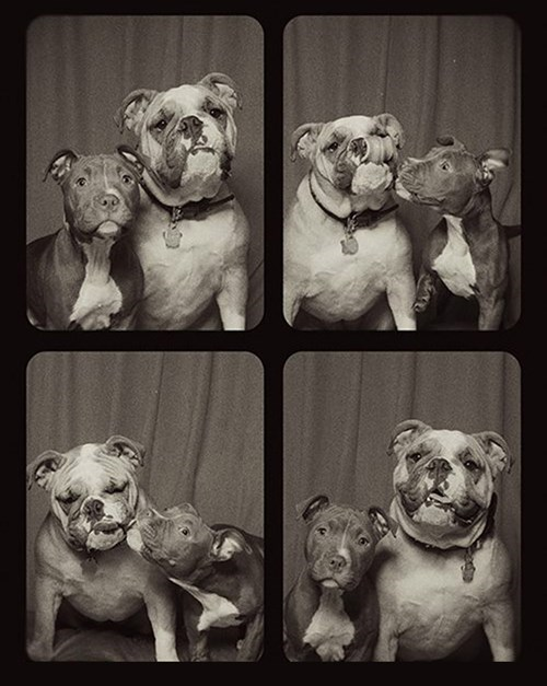 dogs,list,cute,photo booth