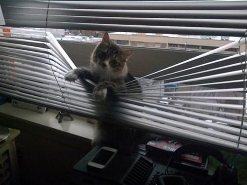 monday thru friday work Cats - 8105354240
