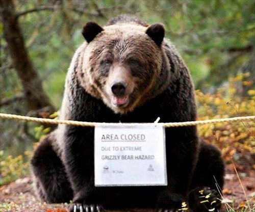 bears signs funny - 8105441792