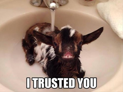 goats,bath,cute,trust