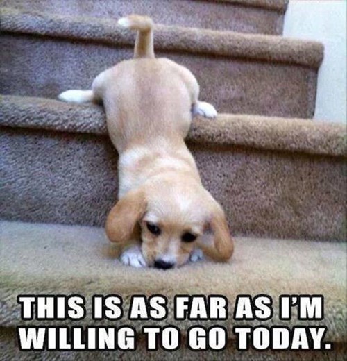 dogs,puppies,stairs,cute