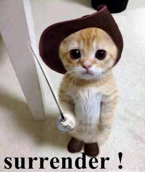 costume kitten cute - 8105477120