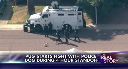 dogs news Probably bad News police - 8105617920